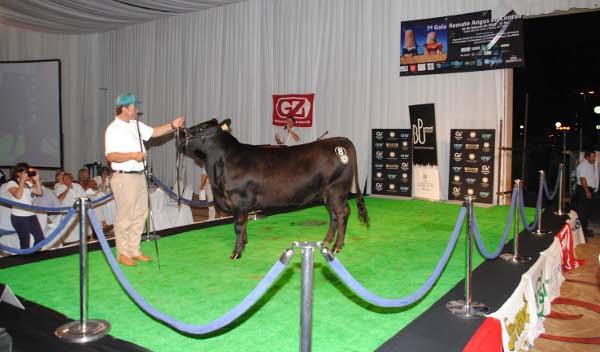 gala-angus-2012-4