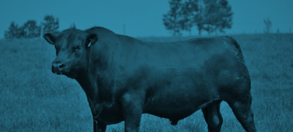 toro-azul
