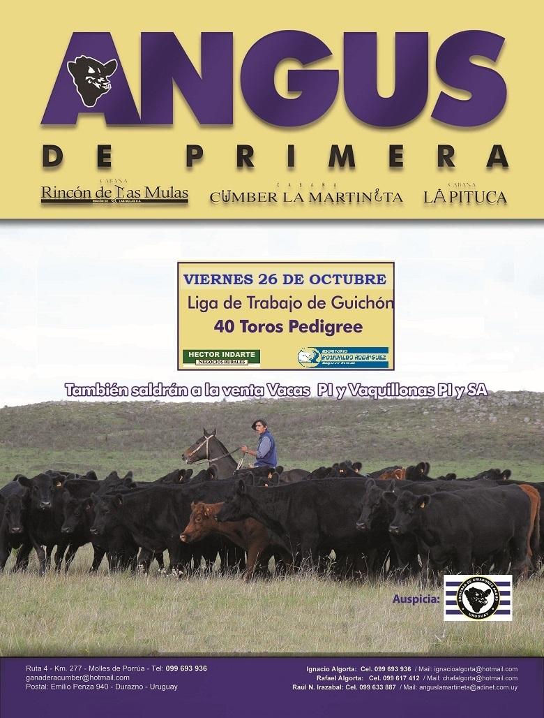 ANGUS DE PRIMERA de Ganadera Cumber, la Martineta, Rincón de las Mulas y la Pituca
