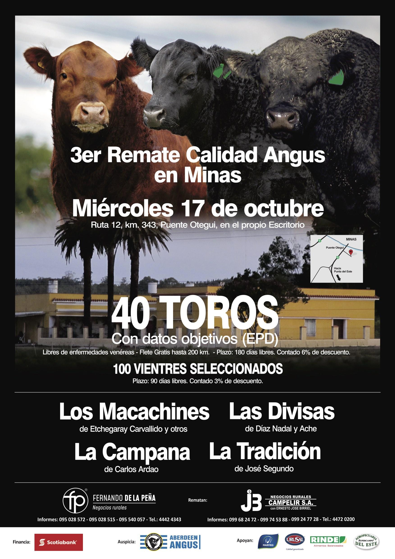 """3 Remate Calidad Angus – """"Las Divisas"""" de Díaz Nadal y Ache, """"Los Macachines"""" de Etchegaray Carvallido,  """"La Tradición"""" de José Segundo y """"La Campana"""" de Carlos Ardao."""