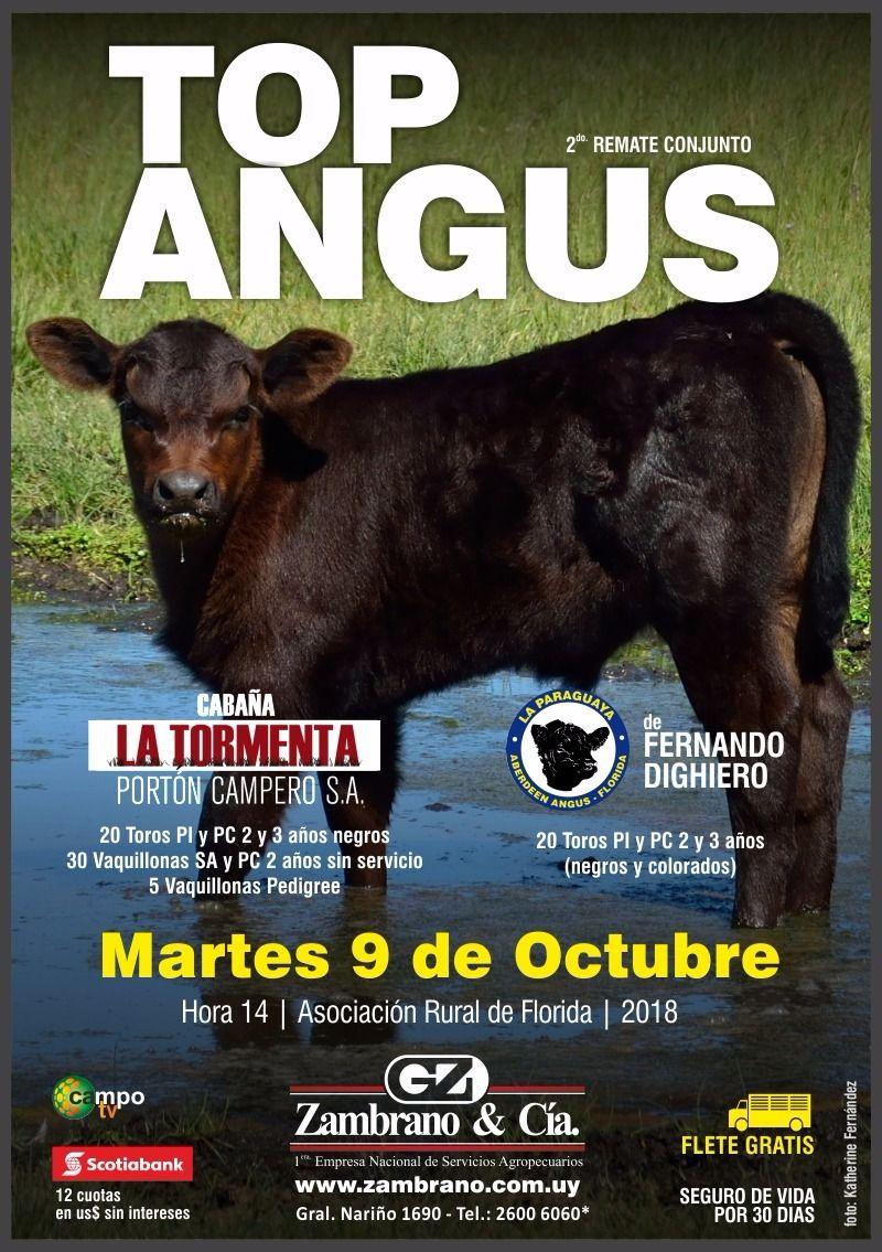 Top Angus- Cabaña La Paraguaya de Fernando Dighiero y Cabaña La Tormenta de Porton  Campero